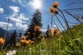 Liechtensteiner Blumenwiese