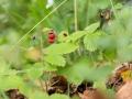 rathay-schwaebische-alb-genuss-7497-jpg