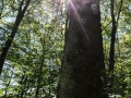 rathay-schwaebische-alb-genuss-7747-jpg