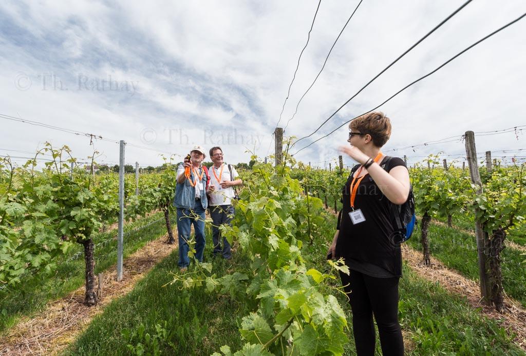 rathay weinsueden reisefotografie 007 Trollinger Tracking und Weingenuss im HeilbronnerLand.