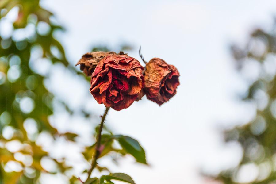 rathay_winter-bodensee-konstanz-0010-jpg