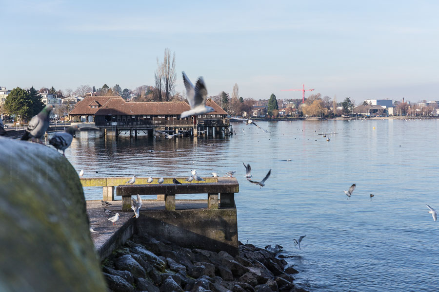 rathay_winter-bodensee-schweiz-0018-jpg