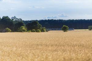 August: Niederbarnim Express (Heidekrautbahn) zwischen Klosterfelde und Wandlitzsee
