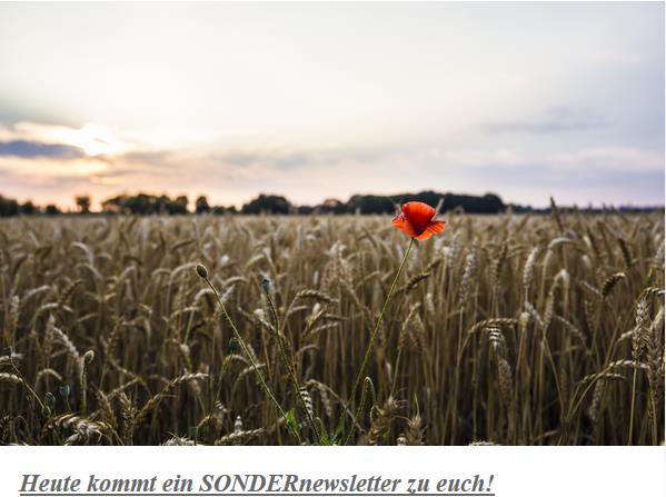Sondernewsletter Fotokurse