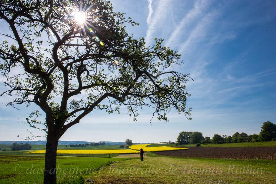 Rathay wandern Luxemburg Sonne Raps Bild der Woche 19   2014