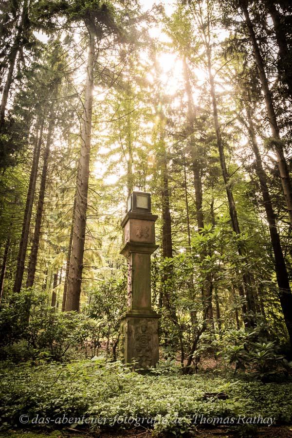 Unterwegs im mystischen Wald in Hohritt / Sasbachwalden