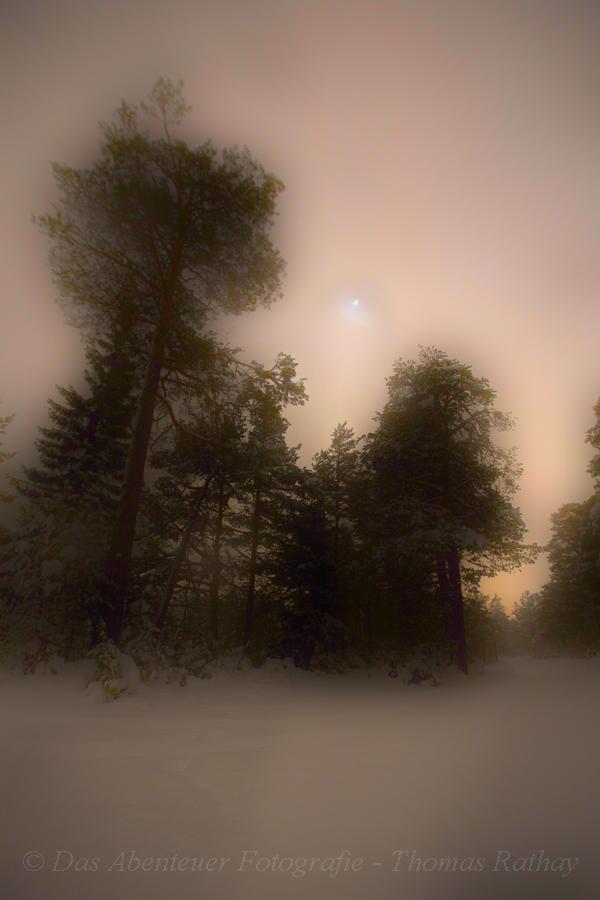 Winterlicher Wald im Karwendel