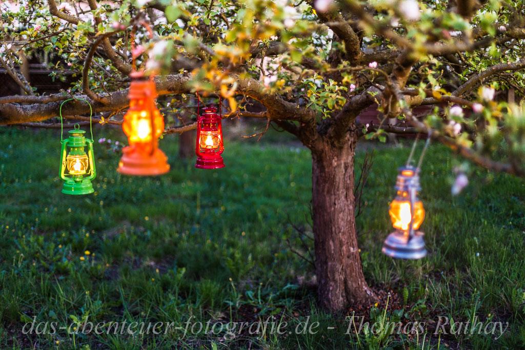 Abends im Blütenrausch zwischen den Obstbäumen im Barnim