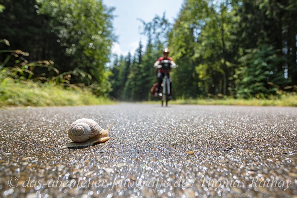Schnecke und Fahrrad