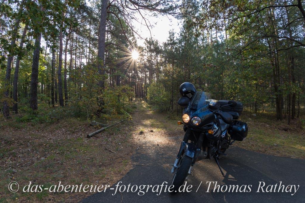 Motorrad im Brandenburgischen Kiefernwald
