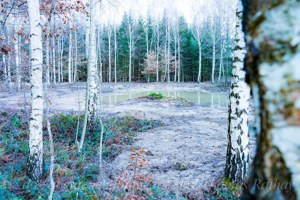 Am Eisweiher im Sindelfinger Wald